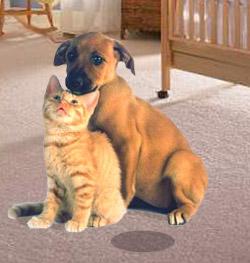 carpet dogandcat